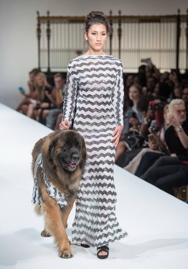 Leonberger_DOG_FASHION_6