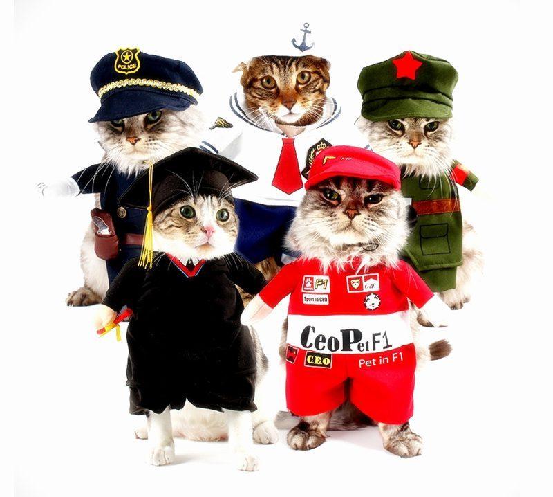 Неужели это - для живых котов?! Обзор весёлых, но бесполезных костюмов для вашего питомца