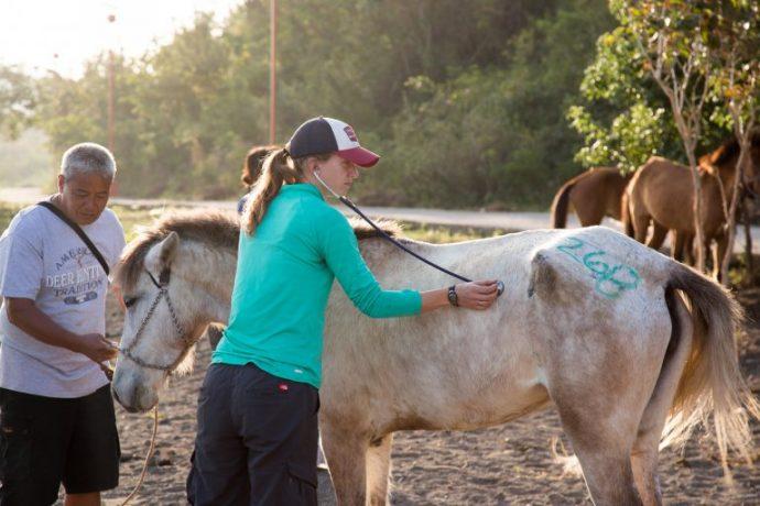 Taal-Horse-Health-Clinic-Feb-17_Initial-exam.-3-768x512