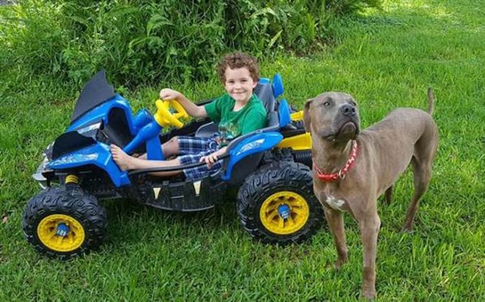 Zayden-and-Slayer-the-Pit-Bull-Melissa-Butt
