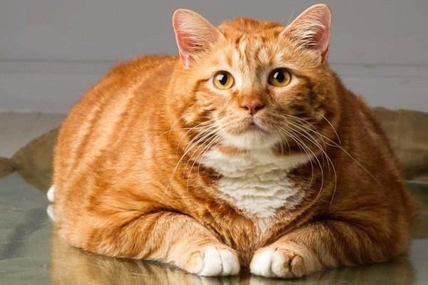 catster-skinny5