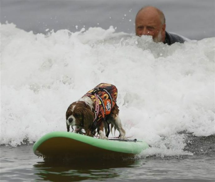dog-surfing-today-170806-inline-01_677a39e938ebab2e078d55d20f2aec92.today-inline-large