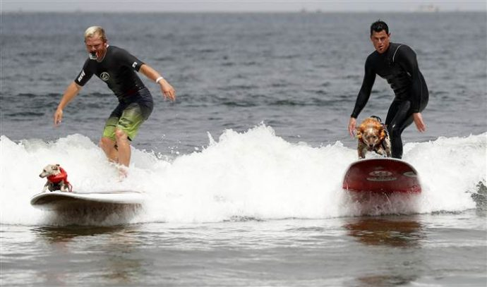 dog-surfing-today-170806-inline-02_677a39e938ebab2e078d55d20f2aec92.today-inline-large