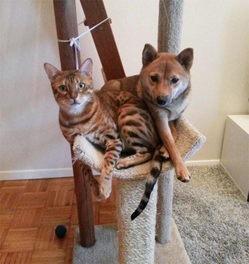 Вот это трюк! Собаки, которые почему-то превратились в котов... :)