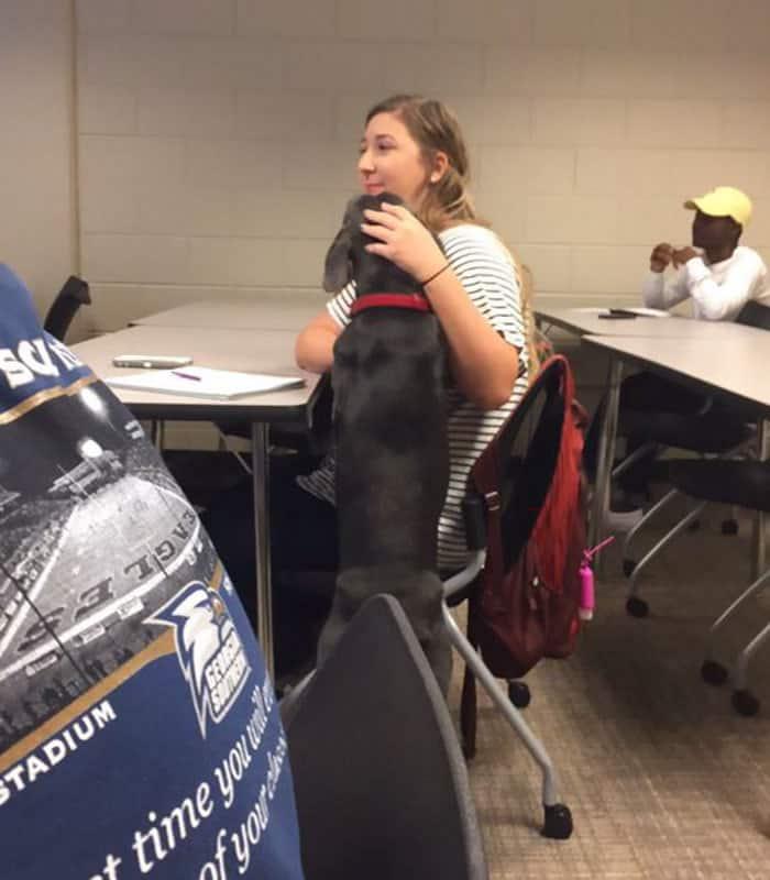 student-professor-dog-hurricane-irma-9