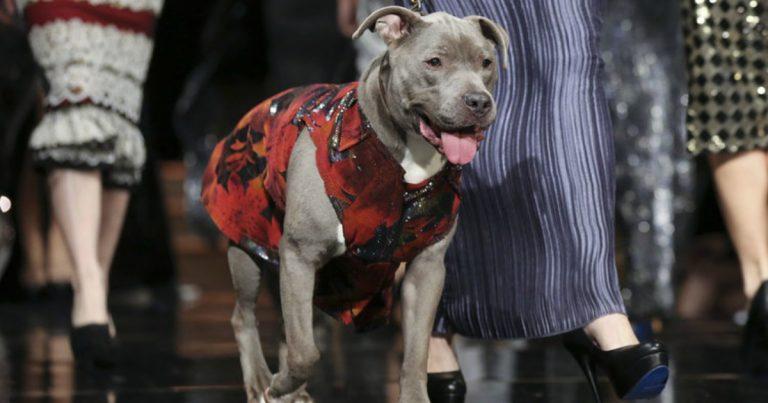 unleashed-anthony-rubio-dog-show-01