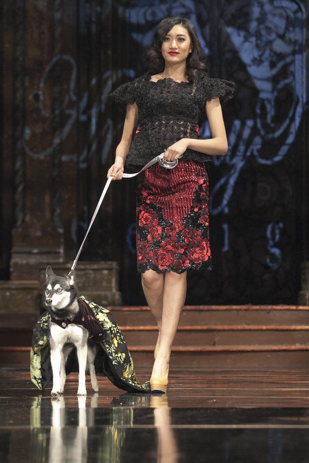 unleashed-anthony-rubio-dog-show-10
