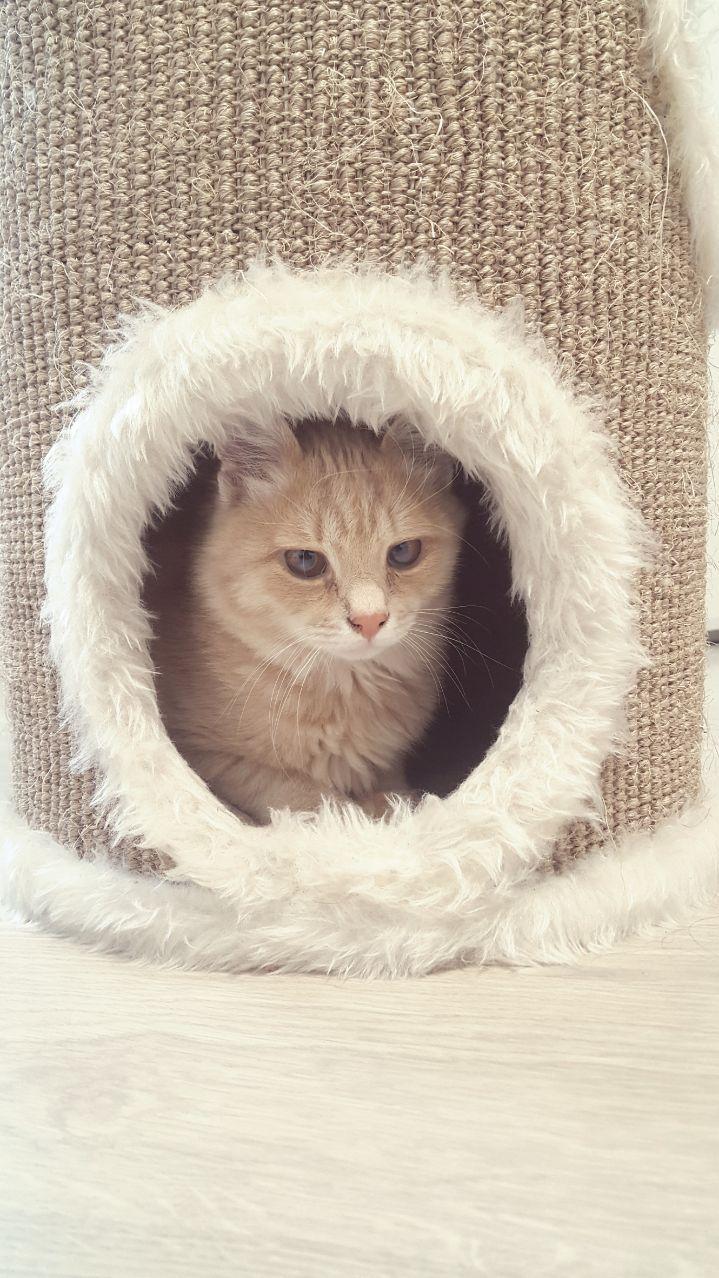 """""""Благородно-розового котёнка мне предложила красивая незнакомка..."""" Так появился Хопа - кот, у которого не было... прорези глаз! рис 4"""