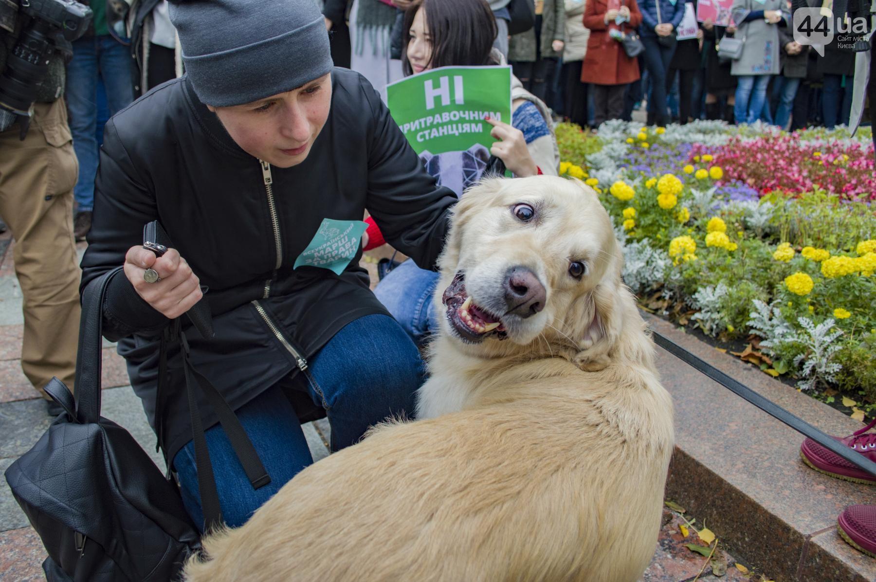Зоозащитники митингуют! В Киеве прошел ежегодный марш за права животных: вот как всё было! рис 3
