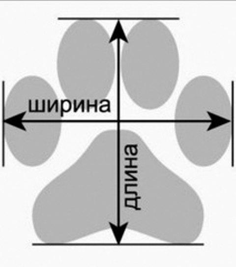 Как правильно подобрать обувь собаке