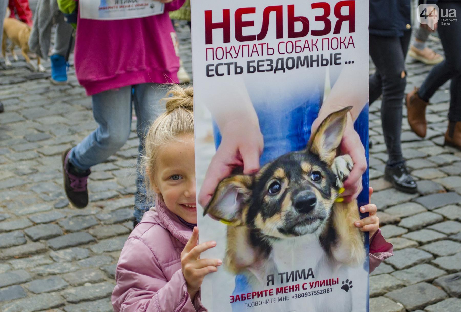 Зоозащитники митингуют! В Киеве прошел ежегодный марш за права животных: вот как всё было! рис 4