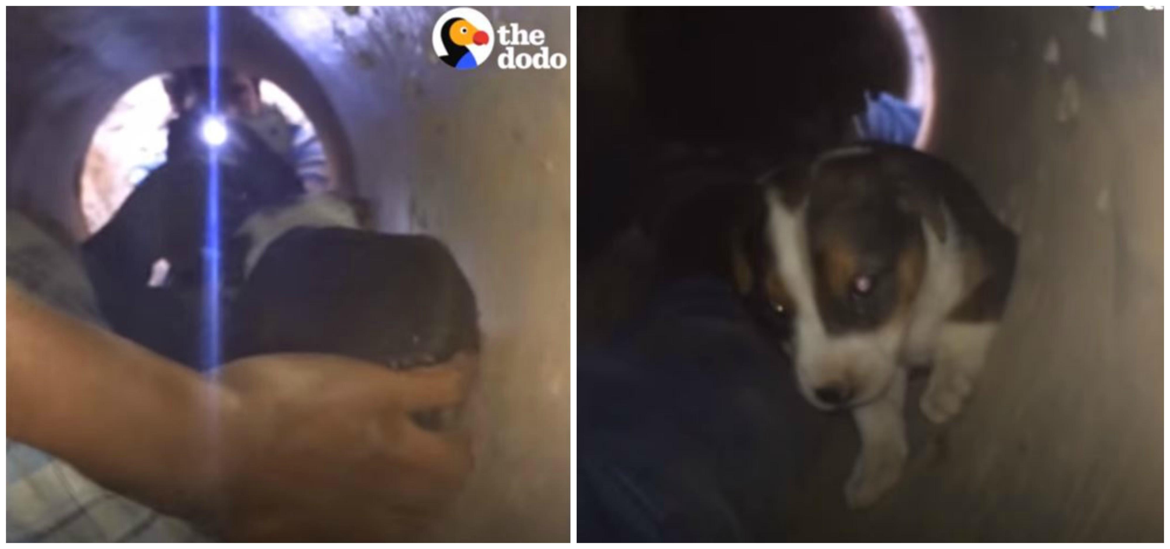 Странные звуки доносились из люка... А рядом беспокойно бегала собака - она знала, что надо спешить! рис 4