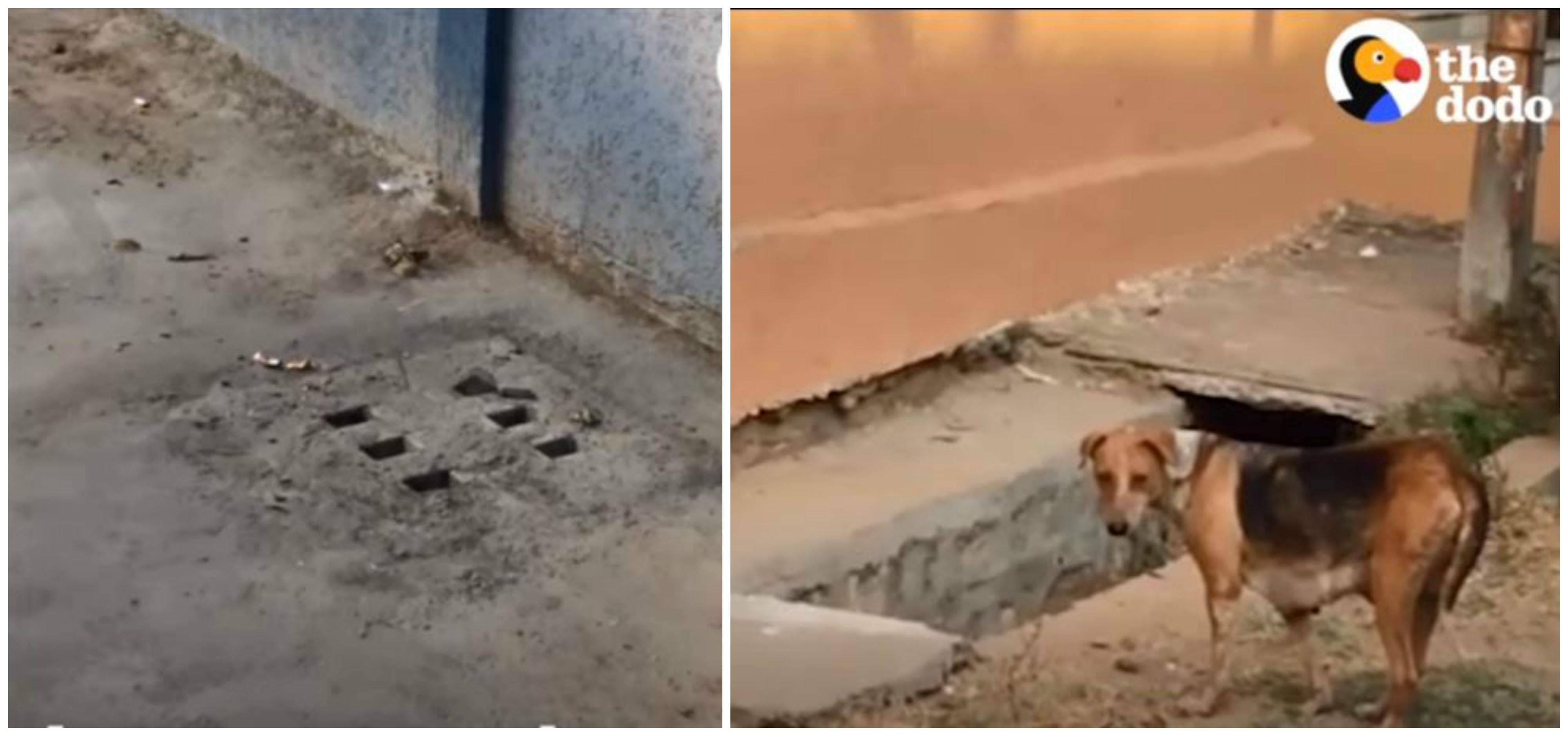 Странные звуки доносились из люка... А рядом беспокойно бегала собака - она знала, что надо спешить!