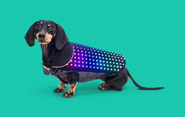 Disco-Dog-630x400