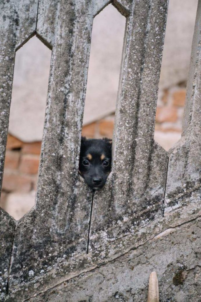 Helens-house-of-hope-A-new-life-for-the-abandoned-and-mistreated-dogs-of-Bulgaria-59db5c6050e2f__880