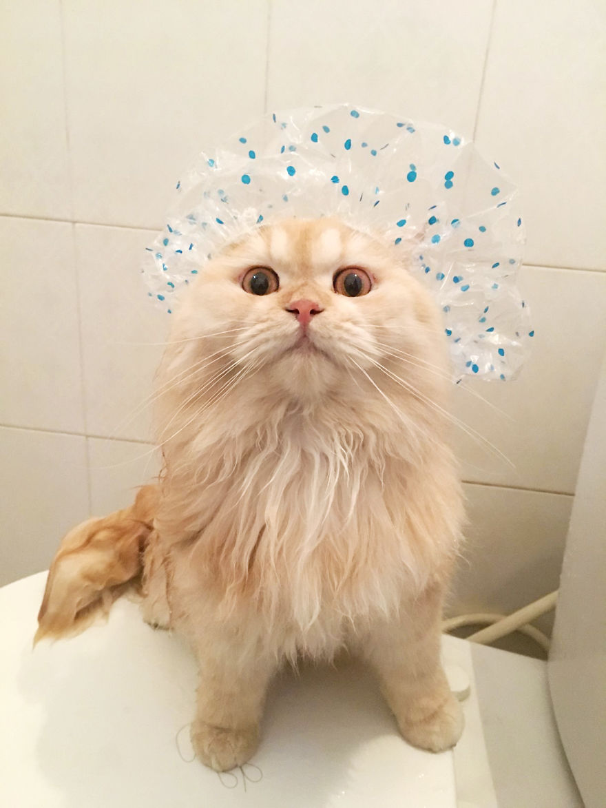 Meet-Meepo-The-Cat-Who-Loves-Shower-59e3642eaeb6f__880