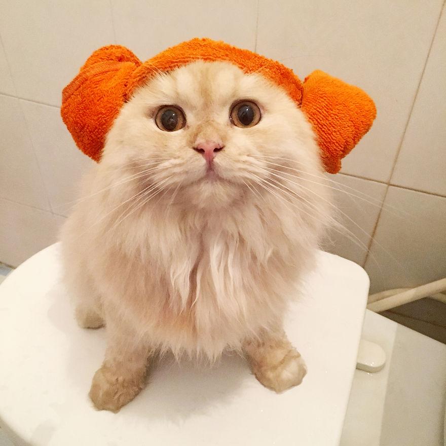 Meet-Meepo-The-Cat-Who-Loves-Shower-59e3647d091b8__880