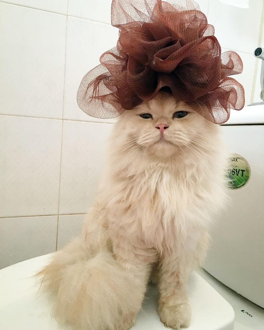 Meet-Meepo-The-Cat-Who-Loves-Shower-59e364b881d32__880