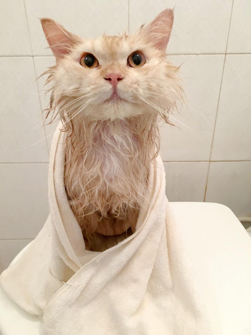 Meet-Meepo-The-Cat-Who-Loves-Shower-59e364f2906aa__880
