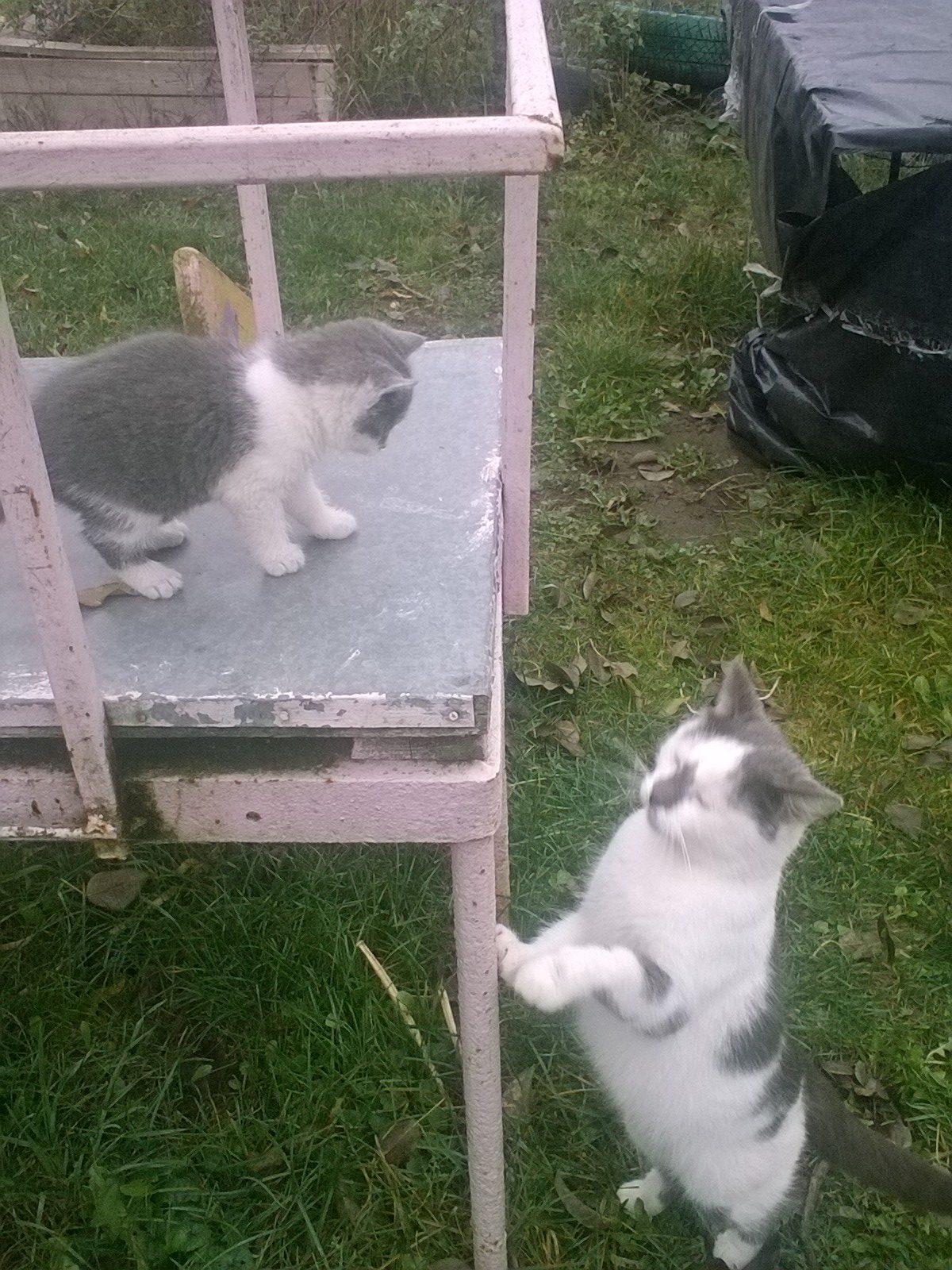"""""""Спасу хотя бы последнего!"""" Хозяева не захотели сохранить её детей, и кошка сбежала от них с малышом в зубах... рис 11"""