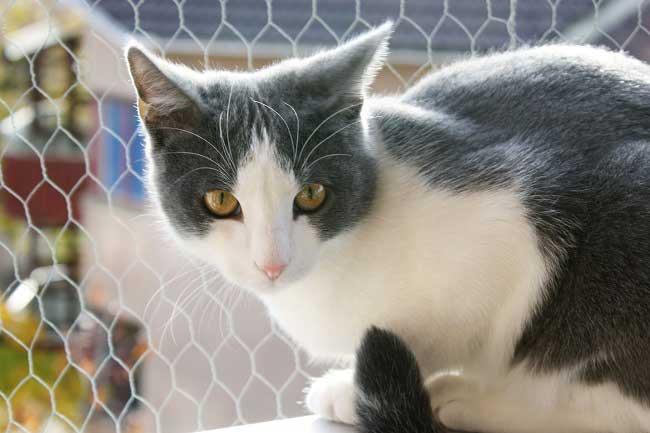 Эгейская кошка болезни