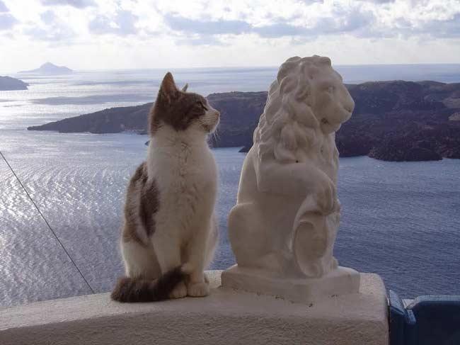 Эгейская кошка питание