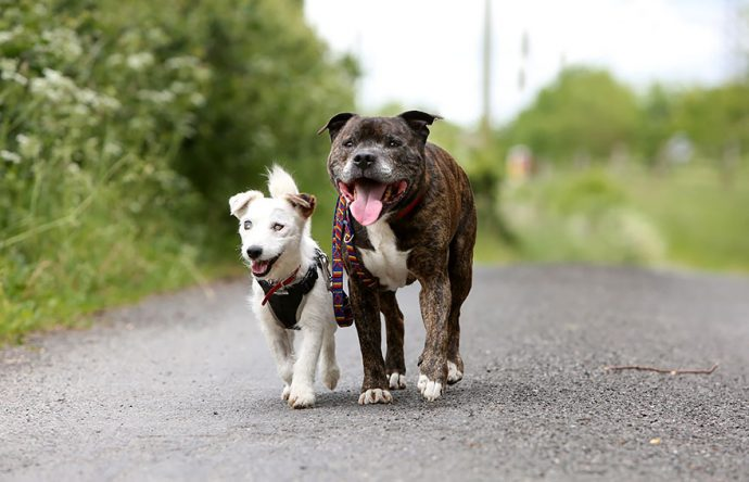 blind-dog-guide-best-friends-abandoned-rescued-stray-aid-shelter-glenn-buzz-3