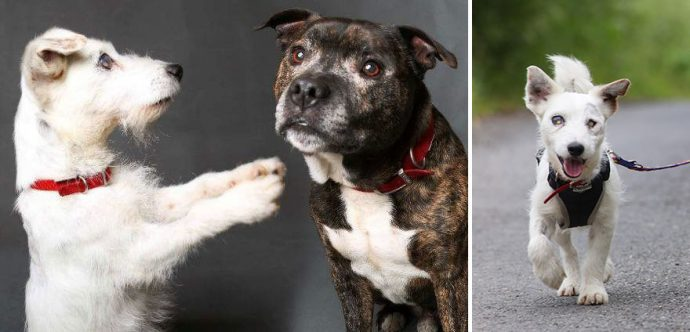 blind-dog-guide-best-friends-abandoned-rescued-stray-aid-shelter-glenn-buzz-7