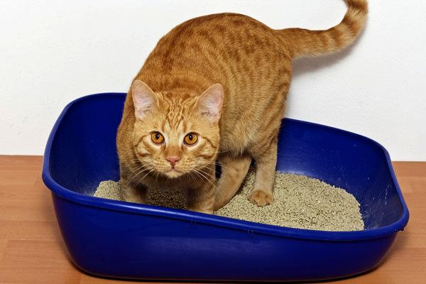 cats-weird-litter-box-behavior-TN1