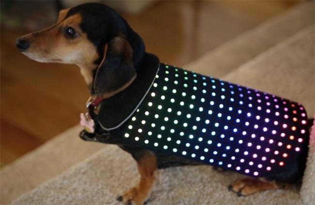disco-dog