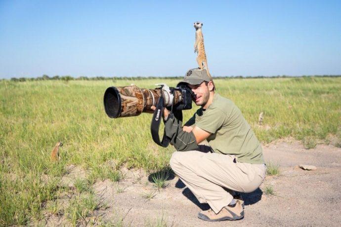 meerkats01
