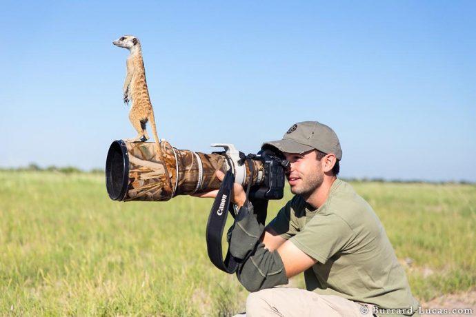 meerkats04