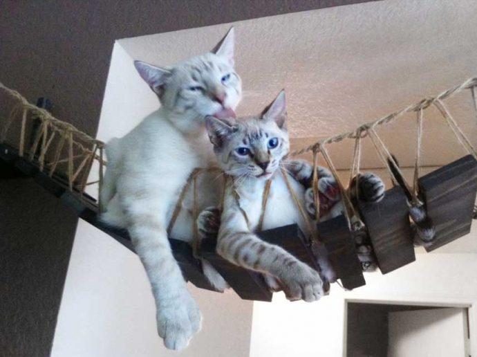 product-indiana-jones-cat-bridge-1