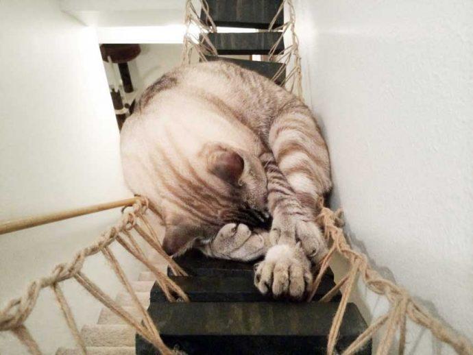 product-indiana-jones-cat-bridge-2