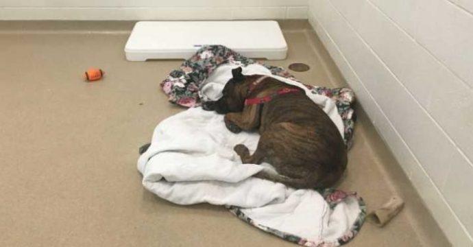 shelter-dog-696x363