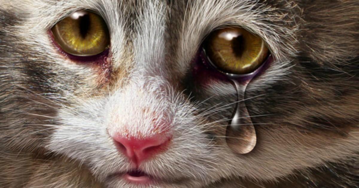 картинки грустного плачущего котенка рельефный