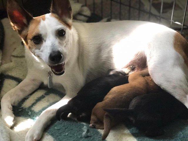 """""""Для меня все дети важны!"""" Собака вскармливает своим молоком 9-рых щенков и... котенка! рис 6"""