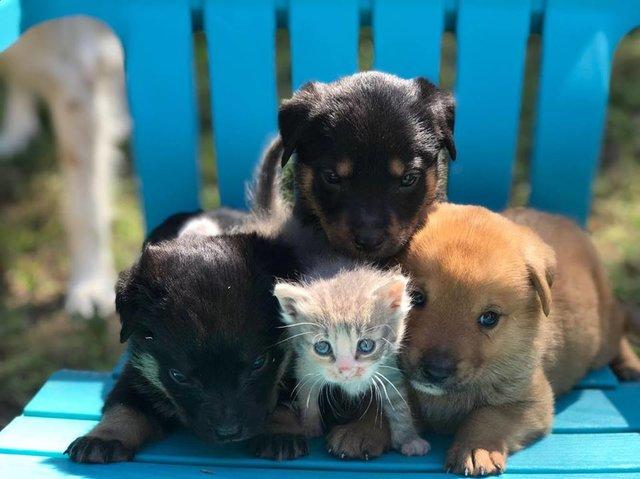 """""""Для меня все дети важны!"""" Собака вскармливает своим молоком 9-рых щенков и... котенка! рис 9"""