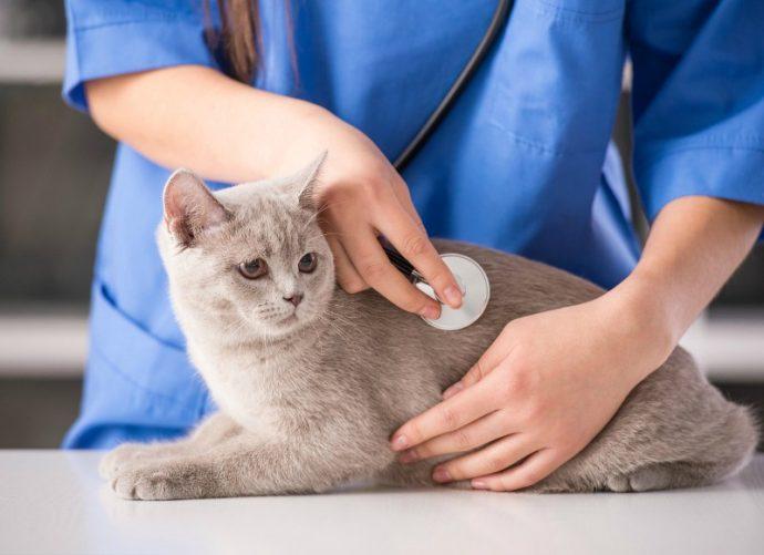 u-veterinara