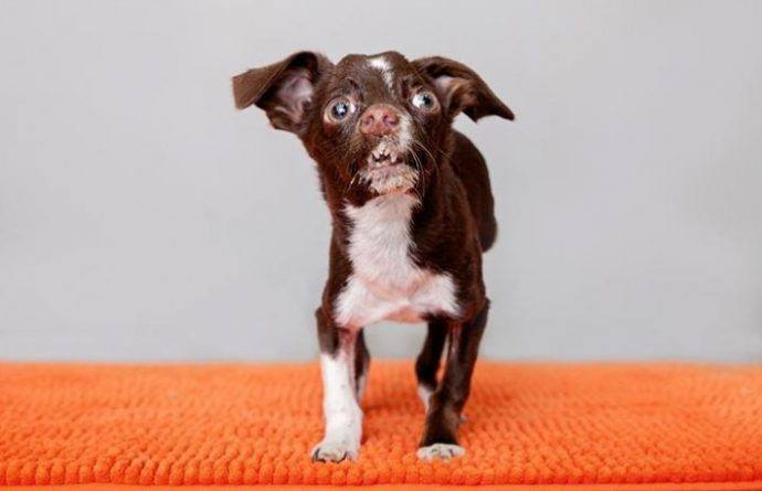 01-cletus-the-dog-710x458