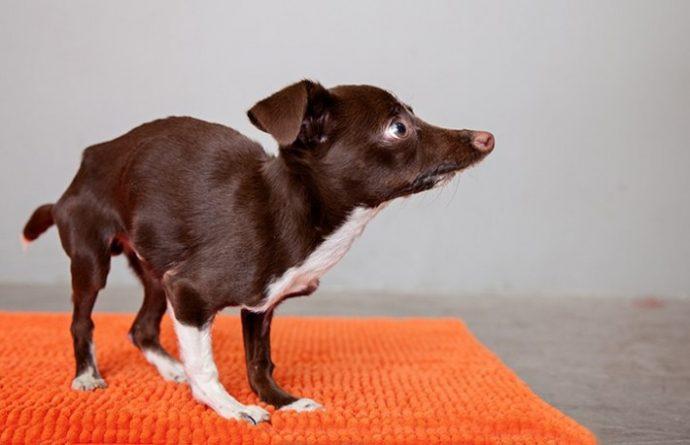 02-cletus-the-dog-710x458