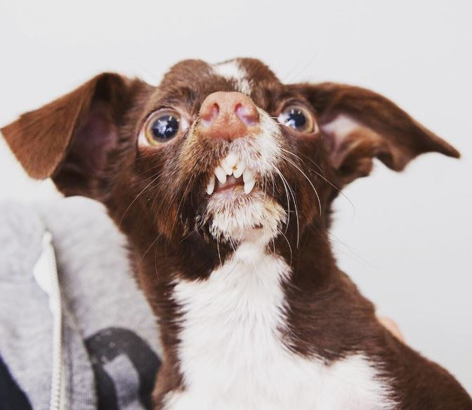 03-cletus-the-dog
