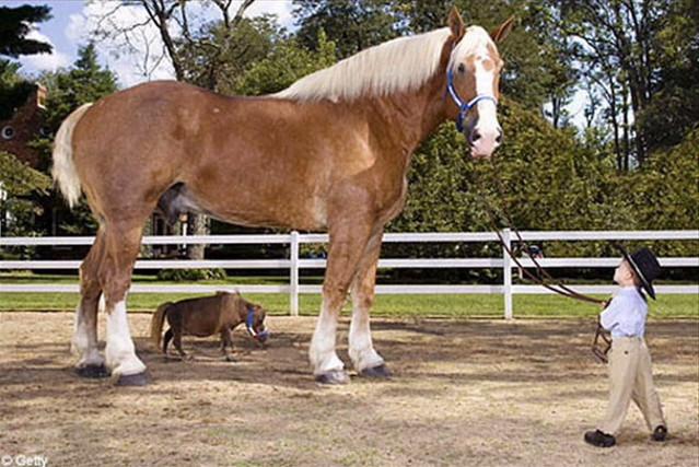 06-mini-horse