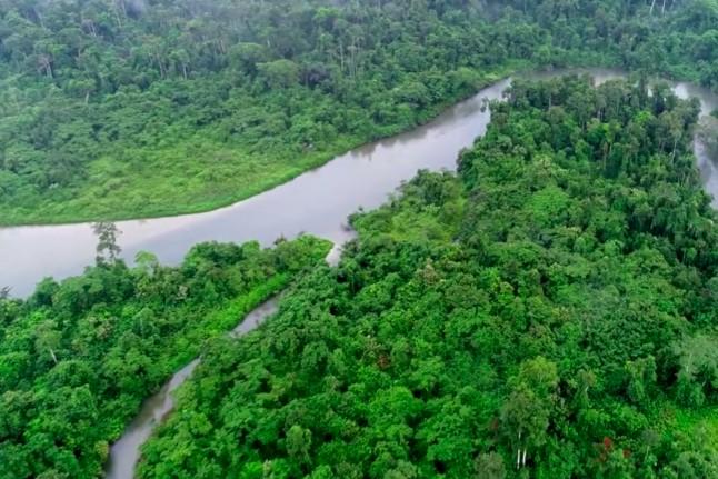 1-gorilla-jungle-view