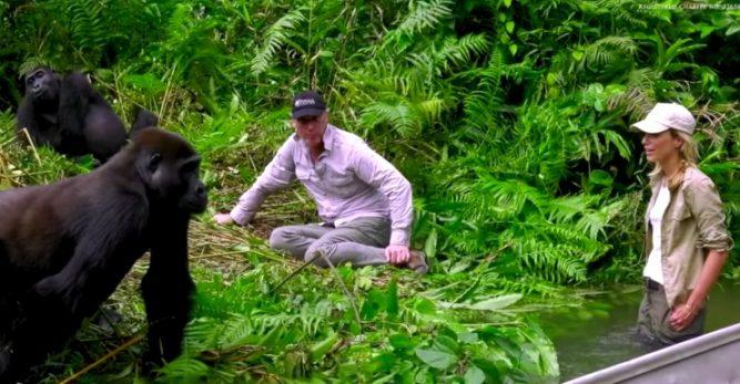10-gorillas-first-meeting-667x347
