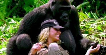 15-gorilla-cuddle