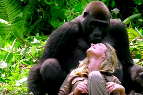 16-gorilla-peek