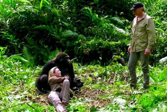18-gorilla-aspinals-e1511978308706