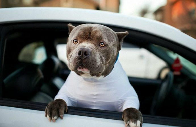 3942879700000578-3830799-Do_I_look_good_in_this_Now_you_can_let_your_mutt_in_your_car_wit-a-96_1476106826496
