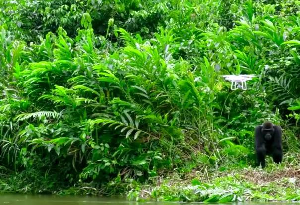 6-gorilla-drone